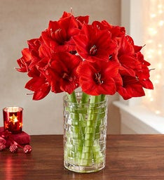Red Lion Amaryllis Bouquet