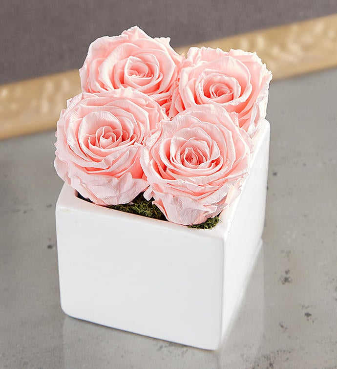 Preserved Pink Roses by Luxe Bloom® – Small