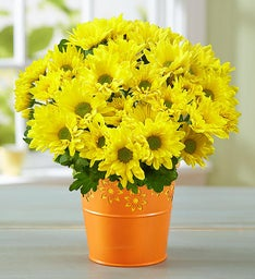 Cheerful Yellow Mum