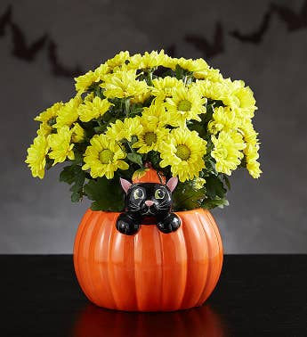 Playful Pumpkin Fall Mum
