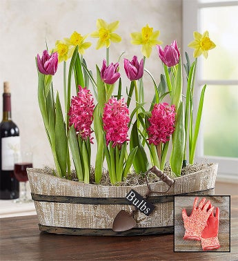 Springtime Vineyard Bulb Garden  Free Gloves