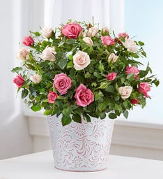 Elegant Bi-color Rose Garden