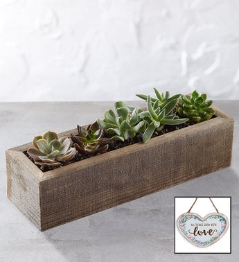 Mini Trough Succulents