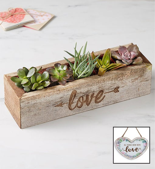 Love is Sweet Succulents