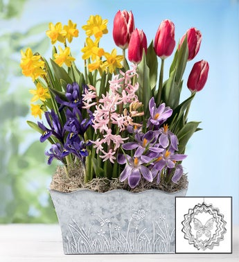 Bountiful Blooms Bulbs  Free Suncatcher