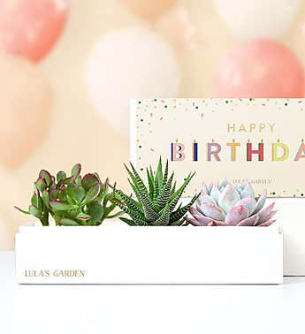 Happy Birthday Succulents by Lula's Garden®
