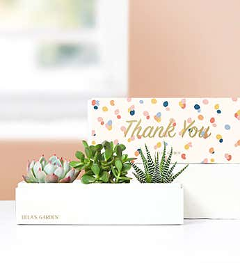 Thank You Succulents by Lula's Garden®