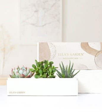 Succulents by Lula's Garden