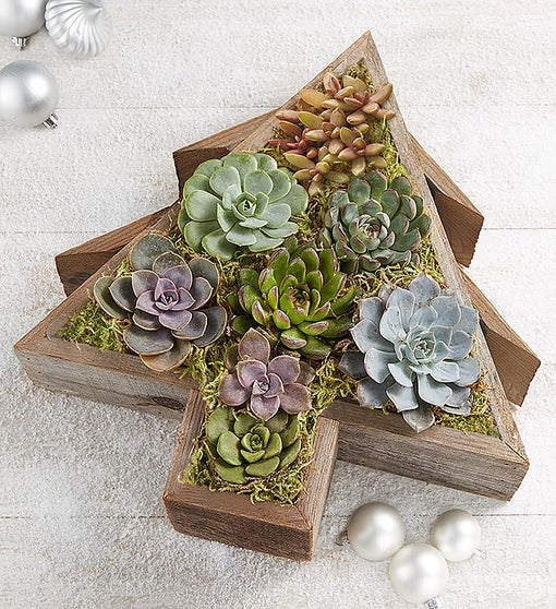 Reclaimed Succulent Christmas Tree