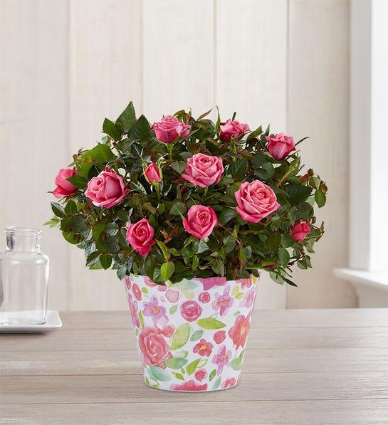 Budding Pink Rose Bouquet