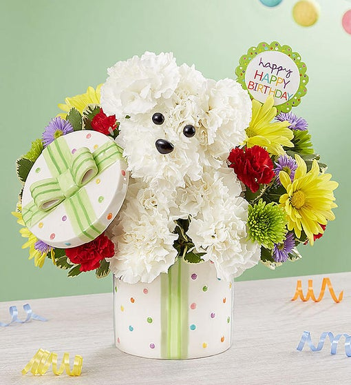 Party PoochTM From 1 800 FLOWERSCOM