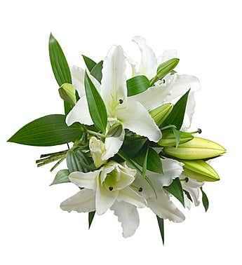 06 Stems of White Lilies
