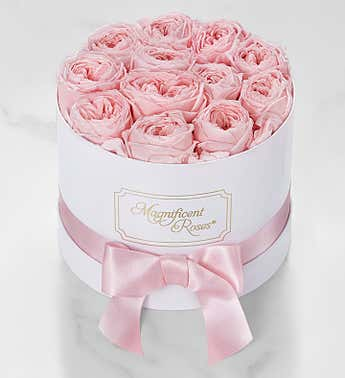 Magnificent Roses® Preserved Pink Garden Roses