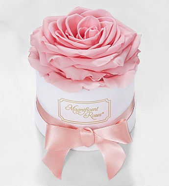 Magnificent Roses® Preserved Pink Rose