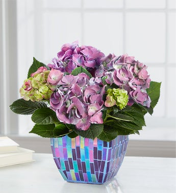 With Love Hydrangea