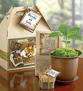 Seeds of Life™ Tree Kit for Sympathy