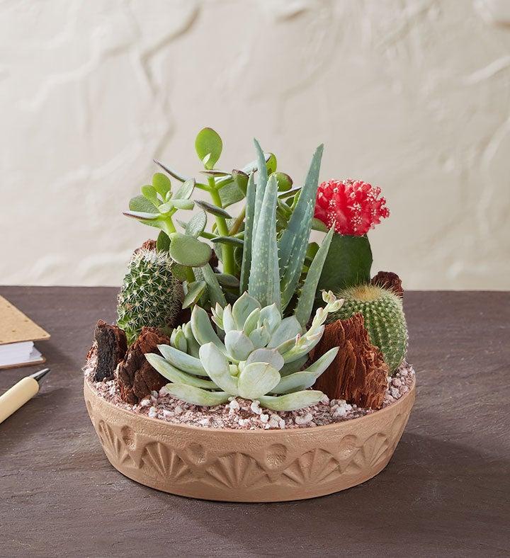 Cactus dish garden 1828 for Dish garden designs