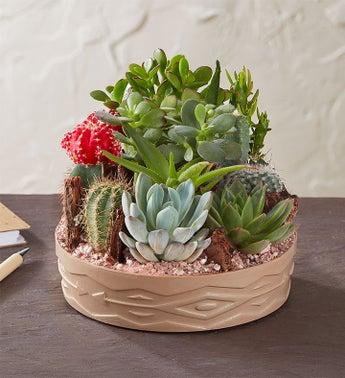 Succulent Delivery Send Succulents Cacti Terrariums 1800flowers