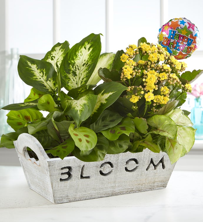 Happy Birthday Plants Birthday Plant Delivery 1800Flowerscom