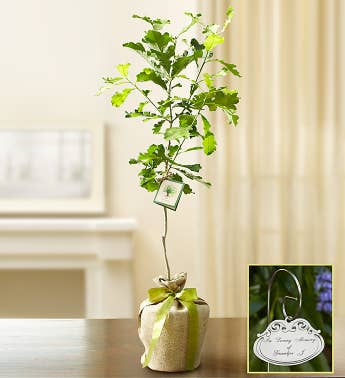 Oak Tree With Plaque For Sympathy