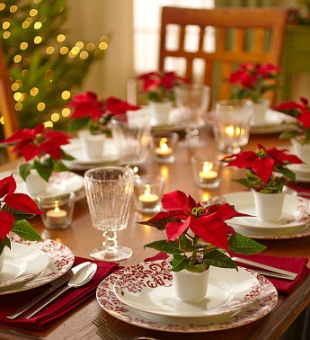 Poinsettia Party Pack