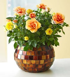 Autumn Bi-color Blooms With Mosaic
