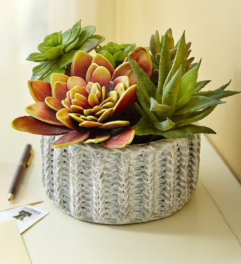 Faux Succulents Mix Arr In Terracotta Vase