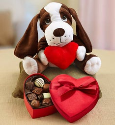 Sweet Puppy with Chocolate