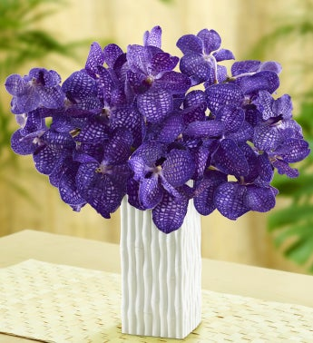 Purple Vanda Orchids