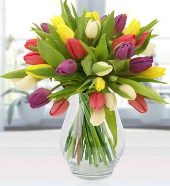 Simply Tulips
