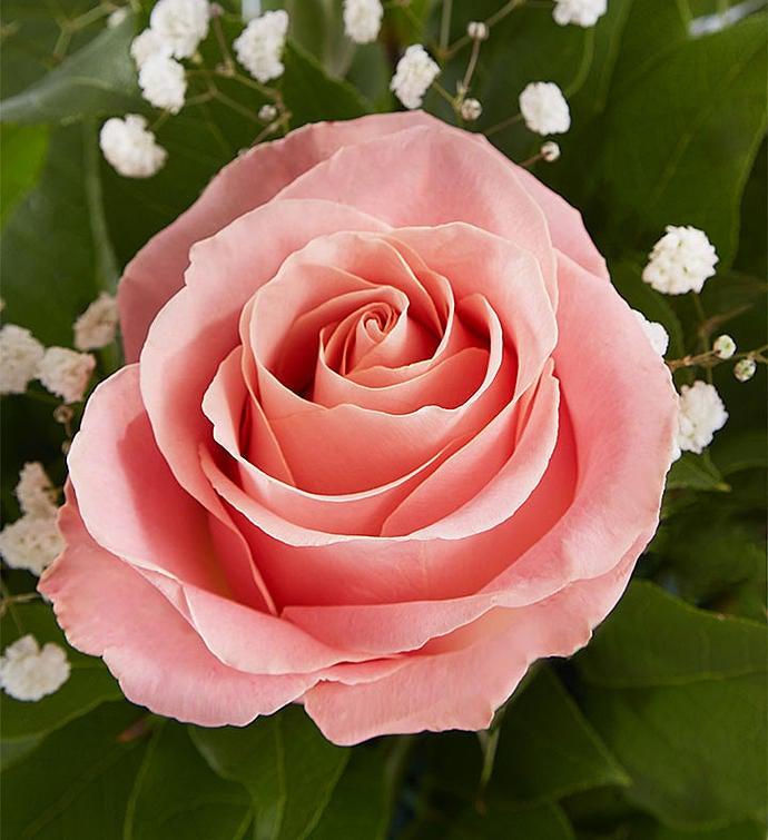 Rose EleganceTM Premium Long Stem Pink Roses