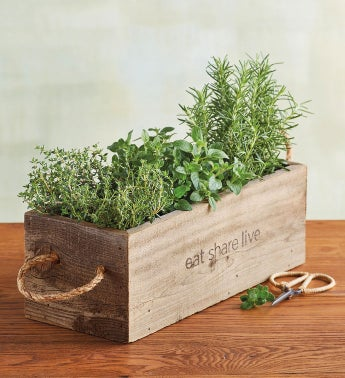 Herb Garden in Wooden Box