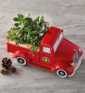 Vintage Truck with Succulents