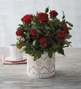 434 Red Mini Rose in Rose Gold Planter